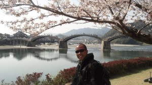 Under the Cherry Blossom Tree in Iwakuni City
