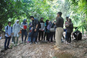 Deeper understanding of bamboo forest landscape structure and function at IPB Bamboo Arboretum